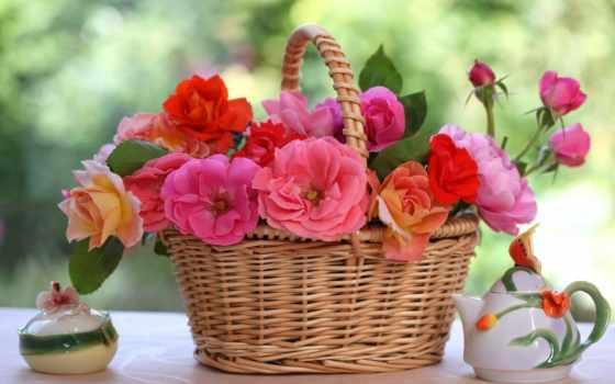 розы, садовые, цветы