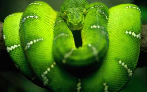 snake, рейтинг, natrix