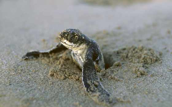 черепаха, baby, animal