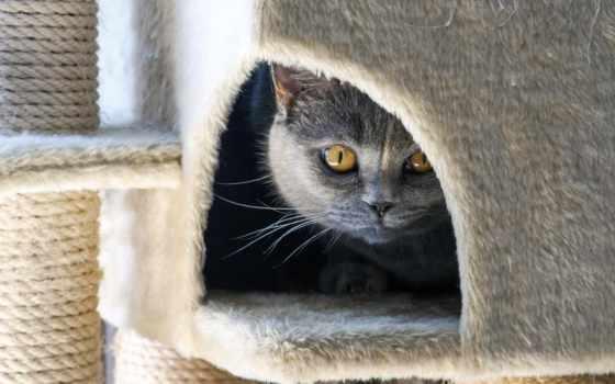 tapety, дек, кот, hiding, cozy, добавить, сладкое,
