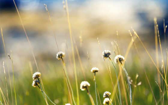 природа, free, plants
