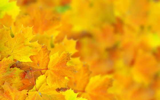 листва, осень, боке