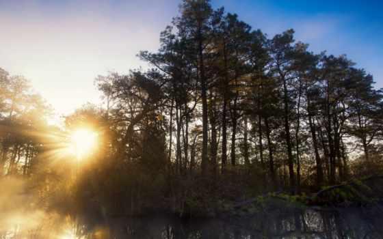 лес, сайте, windows, нашем, заставки, свет, фотографий,