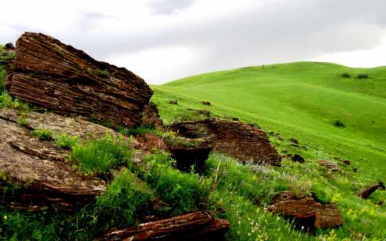 rumput, padang, hijau, pohon, lapangan, fragmen, gambar, gratis, latar, belakang,