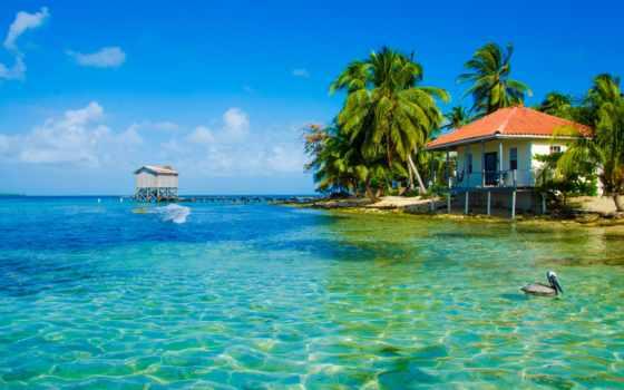 море, пляж, пальмы, tropics, мост, lodge, птица, ocean,