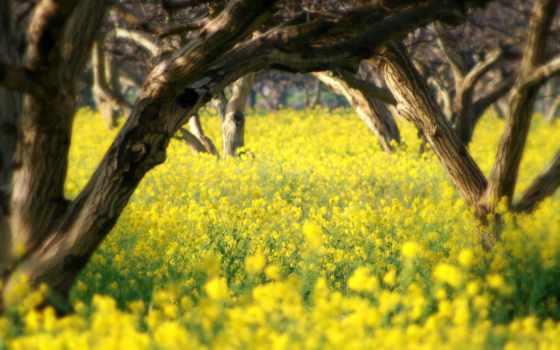 весна, природа, summer, весенние,