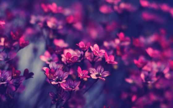 cvety, макро, purple, красивые, розовый,