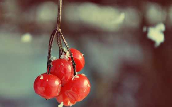 калина, bush, бисера, ягоды, иней, фрукты, winter, berries,