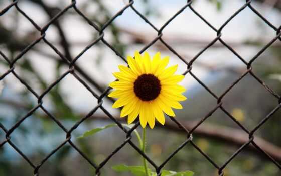 fondos, cvety, хорошем, flores, всех, para,