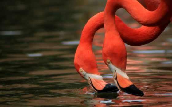фламинго, яndex, коллекциях, коллекцию, посмотрите, птицы,