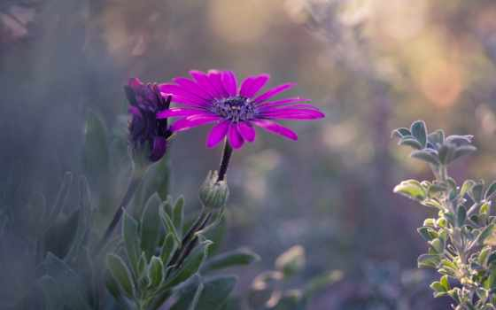 красивые, нежные, cvety, just, attach,