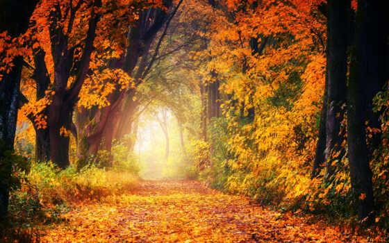осень, доставка, фото, коллекция, ruden, company, картинка, card
