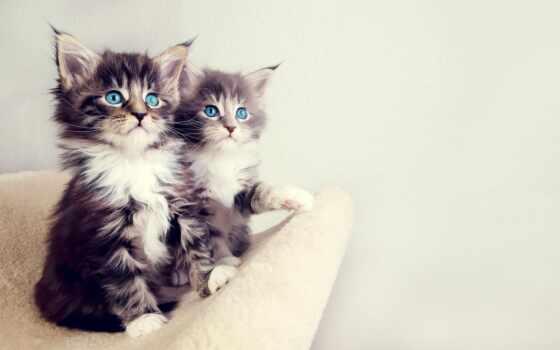 case, кот, котенок, grna, zootovar, animal, love, rear, еда, силиконовый