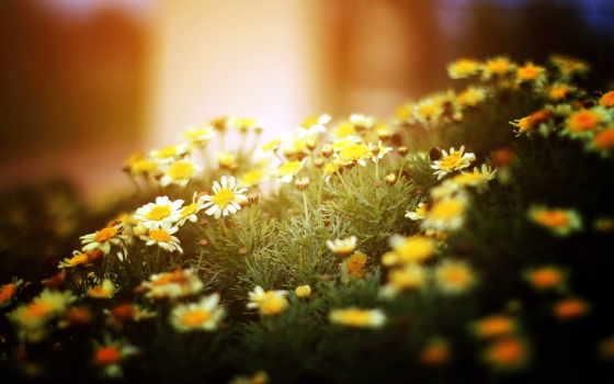 цветы, природа Фон № 56397 разрешение 2560x1600