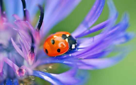 цветы, макро, насекомое