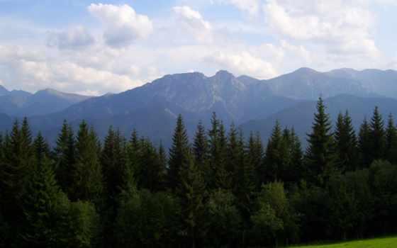 природа, full, лес, страница, trees, горы, луг, taringa, hành,