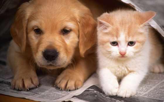 собаки, кошки, кот, собака, котенок, дружба, маленькие, щенок, zhivotnye, днепропетровске,