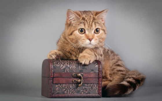 кот, cats, pinterest, kittens, pixdaus, kitty, images, best, сладкое,