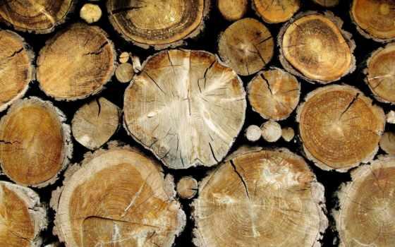 спил, текстуры, деревя