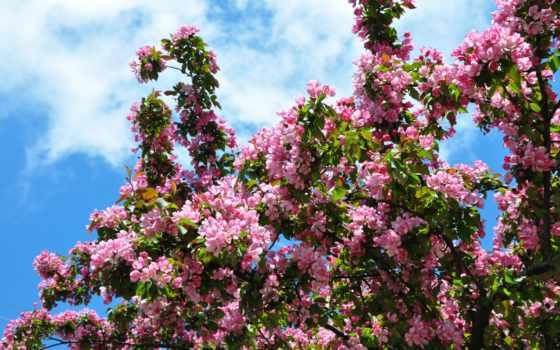 Цветы 100128