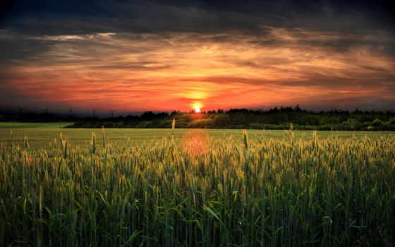 закат, поле, landscape