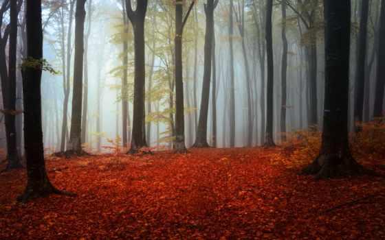 леса, осень, природа, murals,