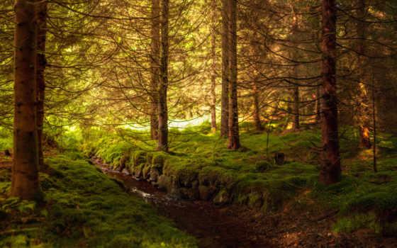 природа, пейзажи -, landscapes, лес, сумерки, панорама,