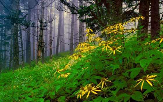 mazandaran, iran, hashem, noor, haghbayan, цветы, nur, леса, разных, among,
