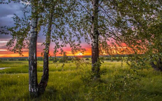 березы, trees, краю, берёзовом, природа, трава, где, березовой, mine, закат, июл,