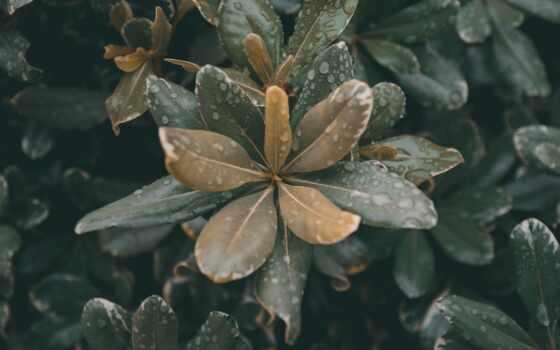 растение, листва, прочитать, high, влага, лист