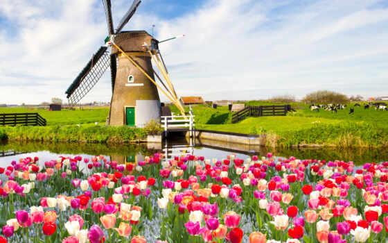 природа, весна, небо, landscape, цветы, поле, тюльпан, облако, песочница, pazlyi, cvety