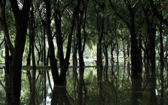 деревья, desktop, вода, лес, nature, болото, swamp,