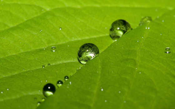 leaf, water, drops, desktop, cute,
