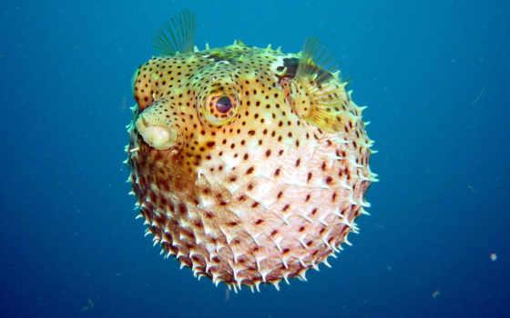 fish, шар, underwater