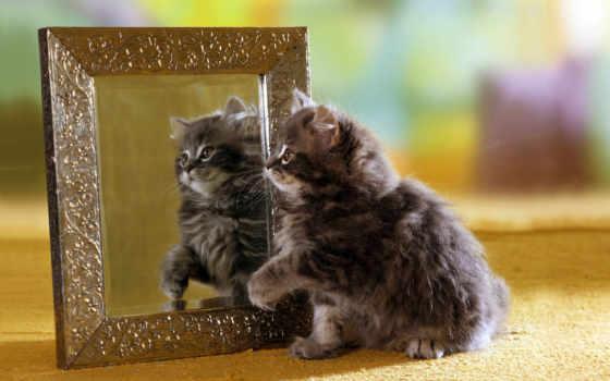зеркало, отражение, котенок