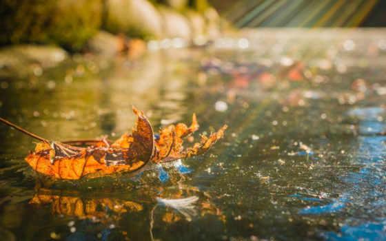 water, осень, изображение