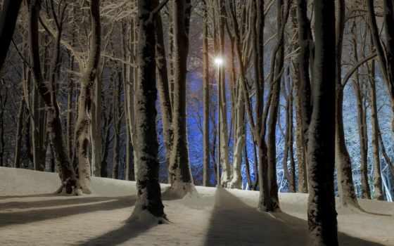лес, ночь, winter Фон № 147655 разрешение 1920x1080