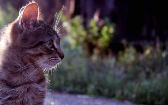 cara, gato, perfil