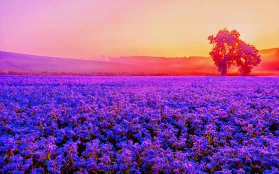 поле, lavender, дек, collector, purple, лаванды, высоком, красивые, magicxbeats,