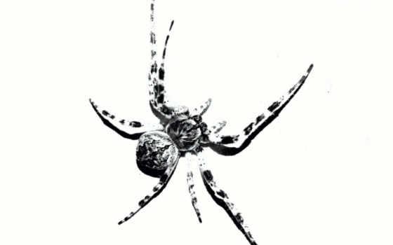 паук, web,