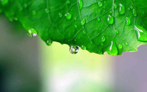 мэри, алиса, молодой, отчаянные, housewives, лист, макро, she, зелёный,