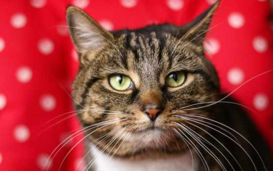кот, red, картинка, short, white, зелёный, black,