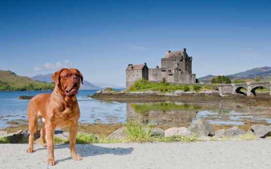 бордоский, mastiff, донан, castle, eilean, шотландия, landscape, картинка, теги, scotia,