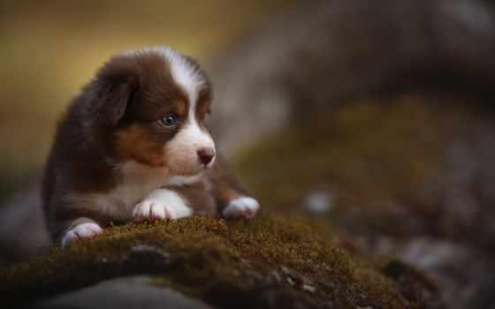 собака, красивый, страница, очень, best, уж, loaded, nice, entertainment, фото