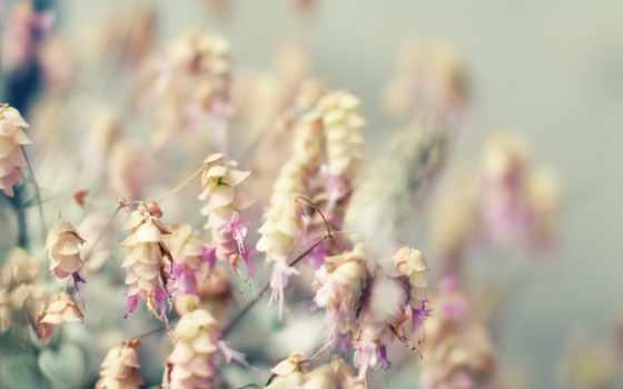 тоне, cvety, трава, море, розовый