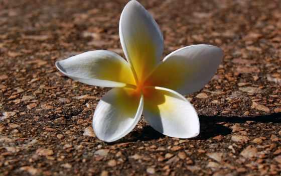 цветы, flowers Фон № 34888 разрешение 1600x1200