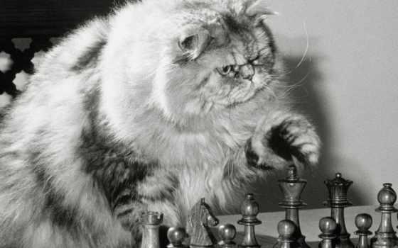chess, приколы