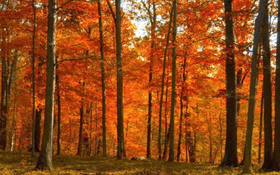 otoño, bosque, pantalla, fondo, fondos, del, rojo, escritorio, naturaleza,
