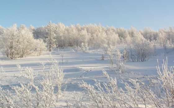 tapety, zima, pulpit, hintergrundbild, winter, tapeta, поле,