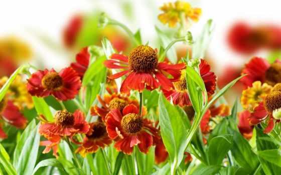 телефон, mobile, природа, flowers, desktop, plants, images,